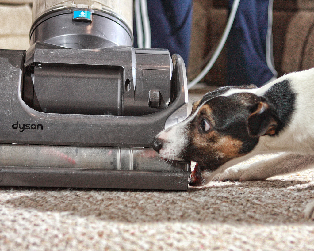 Cleaning With a Pet: Keep Your Spring Cleaning Intact, Even When Fido's Filthy!