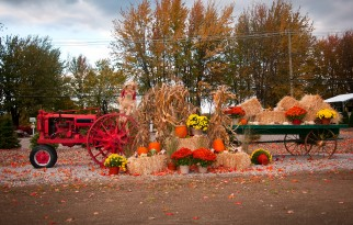 Celebrate the Arrival of Autumn at the Fall Festival