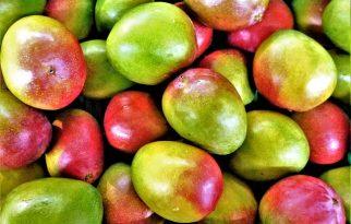 Bring a Love for Tropical Fruit to Mango Mango Dessert