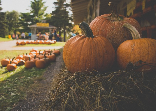 This Weekend Near West Broad Residences: Farm Day at Cherry Hill Farmhouse!