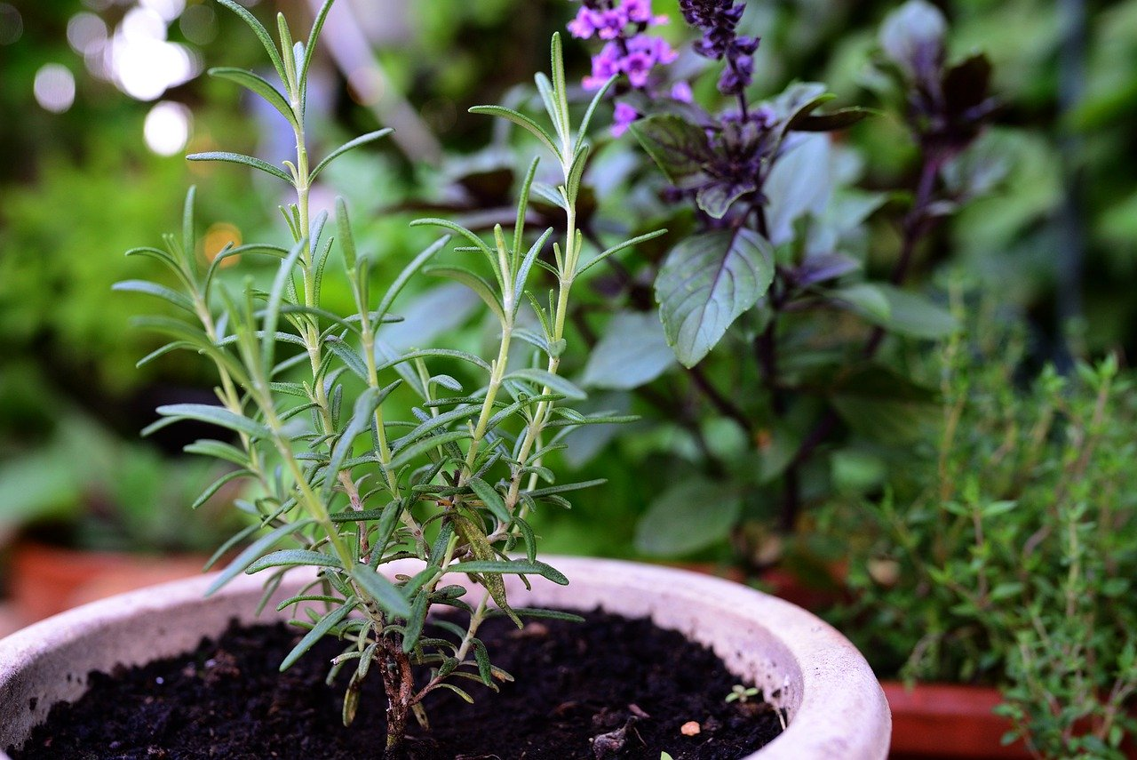 How to Start a Summer Herb Garden Indoors
