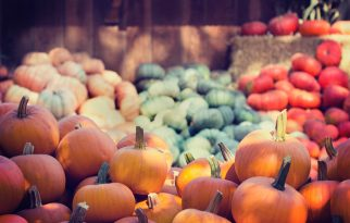 Pluck the Perfect Pumpkin at Meadow Farms in Falls Church