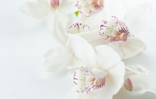 Treat Yourself to Organic Beauty Treatments at Ladan Holistic Spa