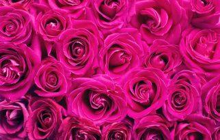 Love Is in Bloom at Galleria Florist
