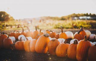DePauls Urban Farm: Experience an Autumn Tradition Near West Broad Residences